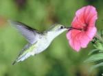 medium_colibri.3.jpg