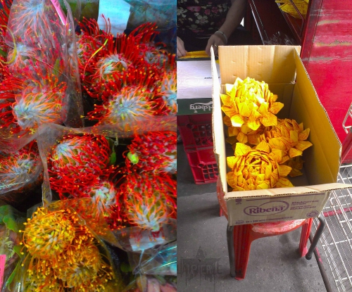 Singapore flower plants