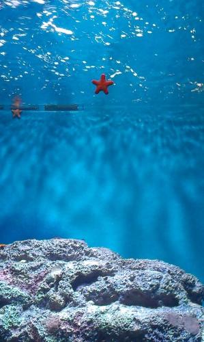 aquarium,noel,etoile