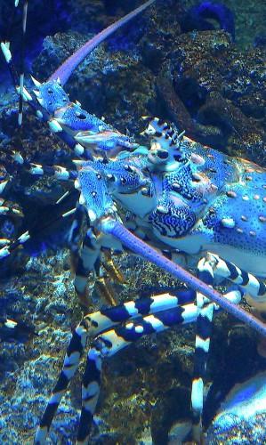 aquarium,noel